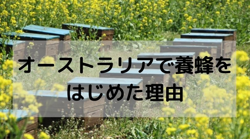 オーストラリアで養蜂を はじめた理由Ozkoi